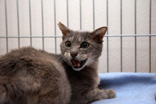 猫助けは人助け。_d0355333_19395139.jpg