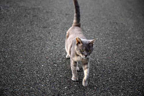 猫助けは人助け。_d0355333_19395148.jpg