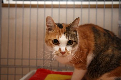猫助けは人助け。_d0355333_19395281.jpg