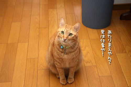 猫おばさんのにおい_d0355333_19395808.jpg