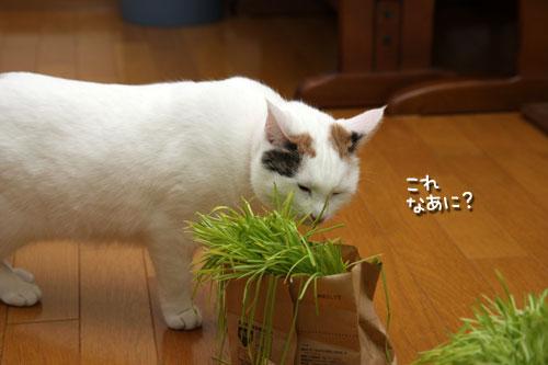 しなしな猫草初体験_d0355333_19425536.jpg