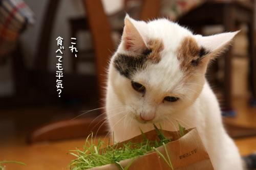 しなしな猫草初体験_d0355333_19425599.jpg