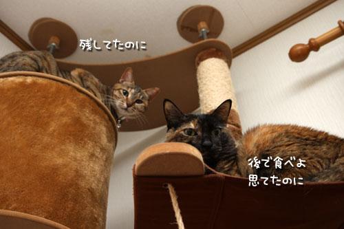 しなしな猫草初体験_d0355333_19425604.jpg