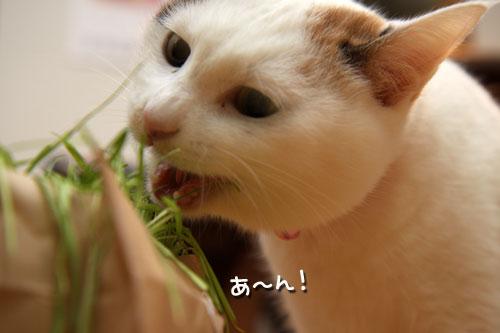 しなしな猫草初体験_d0355333_19425643.jpg