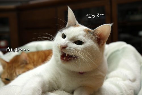 乗せられやすい猫_d0355333_19425868.jpg