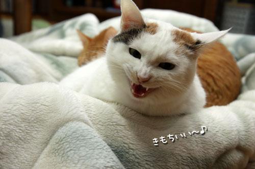 乗せられやすい猫_d0355333_19425892.jpg