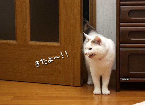 ドアの見張り番_d0355333_19432543.jpg