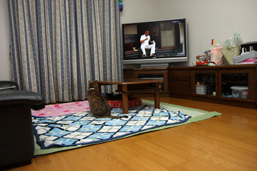 テレビを見る猫_d0355333_19440141.jpg