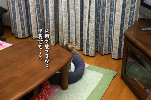 テレビを見る猫_d0355333_19440262.jpg