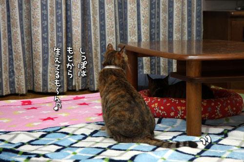 テレビを見る猫_d0355333_19440277.jpg