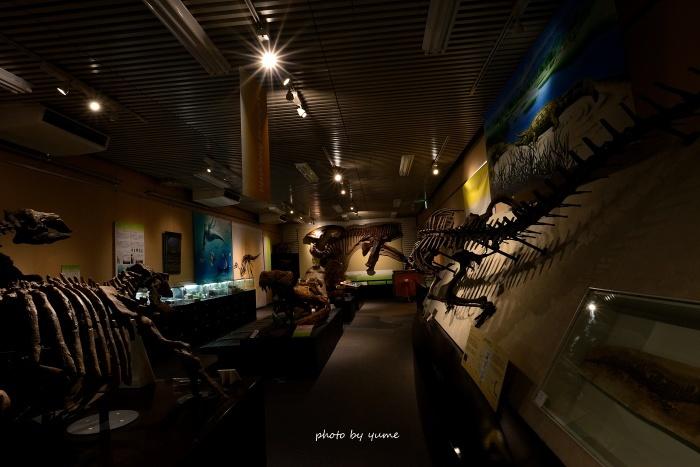 北大博物館 完結_a0322950_07344854.jpg