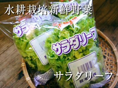 農薬や消毒を一切せずに育ったサラダ用の水耕栽培の生野菜を大好評販売中!_a0254656_16565841.jpg