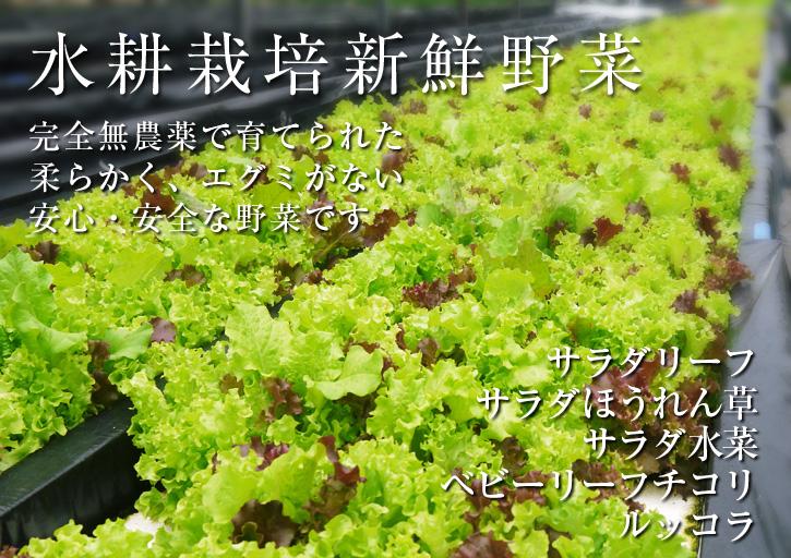 農薬や消毒を一切せずに育ったサラダ用の水耕栽培の生野菜を大好評販売中!_a0254656_17101387.jpg