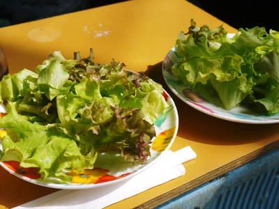農薬や消毒を一切せずに育ったサラダ用の水耕栽培の生野菜を大好評販売中!_a0254656_17222098.jpg