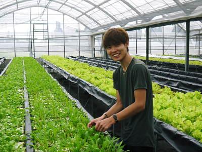 農薬や消毒を一切せずに育ったサラダ用の水耕栽培の生野菜を大好評販売中!_a0254656_17534532.jpg