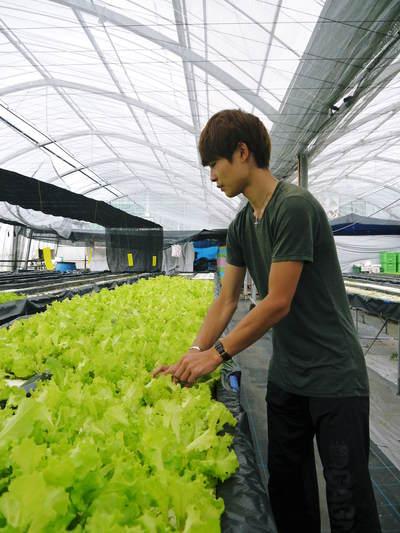 農薬や消毒を一切せずに育ったサラダ用の水耕栽培の生野菜を大好評販売中!_a0254656_181735.jpg