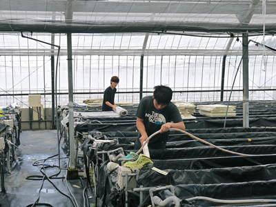 農薬や消毒を一切せずに育ったサラダ用の水耕栽培の生野菜を大好評販売中!_a0254656_1819030.jpg