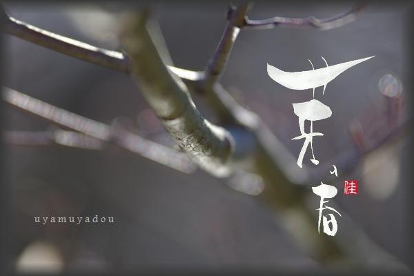木々うごきはじめる_a0157263_21021059.jpg