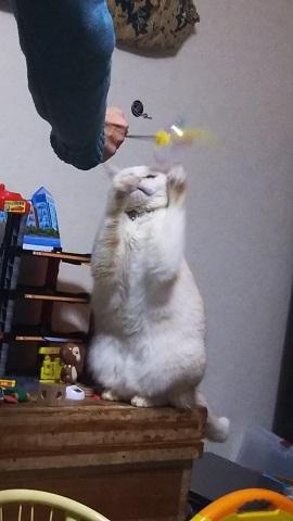 ニュー猫じゃらし_f0228680_09160776.jpg