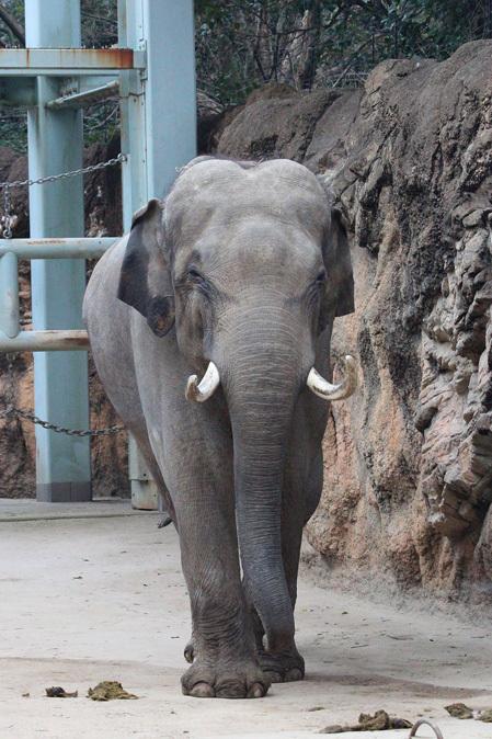 2月の上野動物園~ツチブタ夫妻別居中!?_b0355317_20562683.jpg
