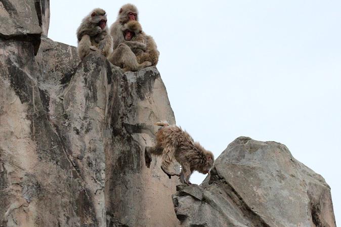 2月の上野動物園~ツチブタ夫妻別居中!?_b0355317_21153205.jpg