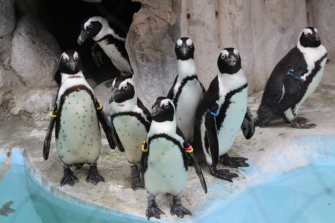 2月の上野動物園~ツチブタ夫妻別居中!?_b0355317_21194727.jpg