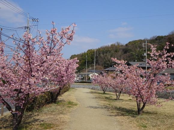 倉敷川ウォーキング_b0163121_22164204.jpg