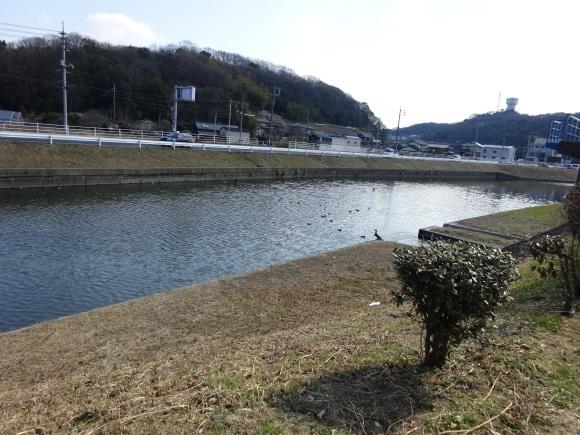 倉敷川ウォーキング_b0163121_22172534.jpg