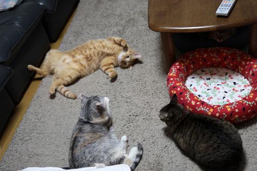 猫の集会_d0355333_10554153.jpg