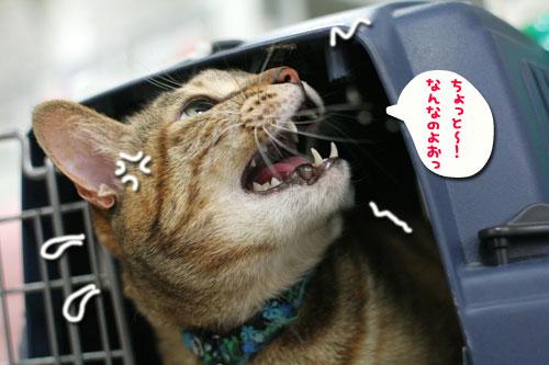 頼り頼られクロスマッチ★緊急のお願い★_d0355333_10554741.jpg