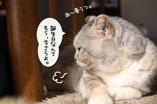 まみちゃん★10歳_d0355333_11005514.jpg