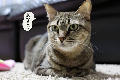 あすかちゃんの作戦_d0355333_11005614.jpg