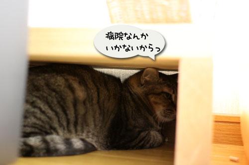 あすかちゃんの作戦_d0355333_11005679.jpg