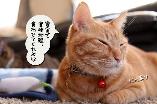 猫自慢写真コンテストのお知らせ_d0355333_11010232.jpg