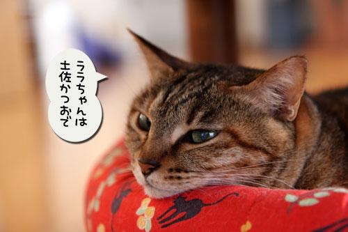 猫自慢写真コンテストのお知らせ_d0355333_11010320.jpg