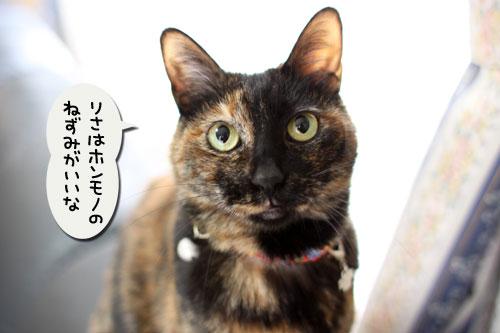 猫自慢写真コンテストのお知らせ_d0355333_11010345.jpg