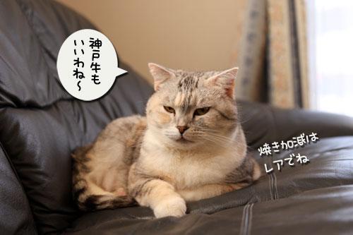 猫自慢写真コンテストのお知らせ_d0355333_11010347.jpg