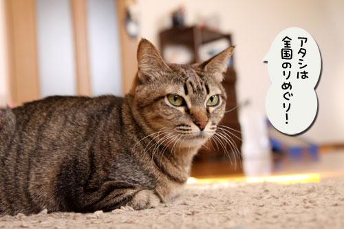 猫自慢写真コンテストのお知らせ_d0355333_11010384.jpg