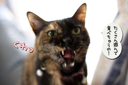 猫自慢写真コンテストのお知らせ_d0355333_11010489.jpg