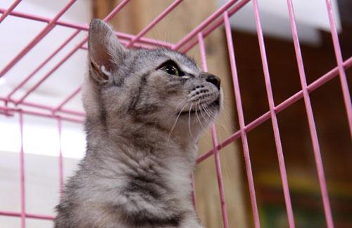 行政収容猫訪問_d0355333_11012202.jpg