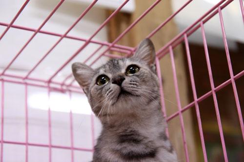 行政収容猫訪問_d0355333_11012295.jpg