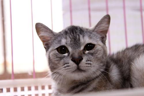 行政収容猫訪問_d0355333_11012303.jpg