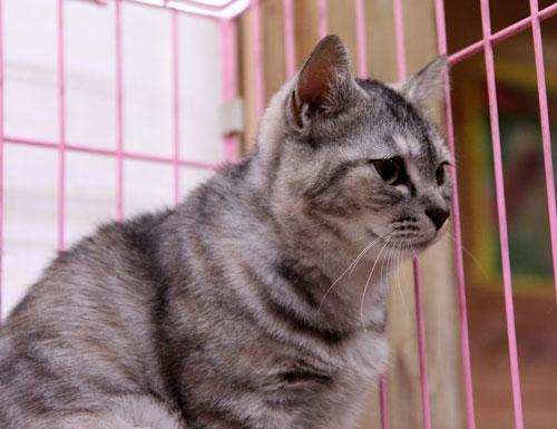 行政収容猫訪問_d0355333_11012437.jpg