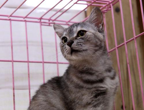 行政収容猫訪問_d0355333_11012483.jpg