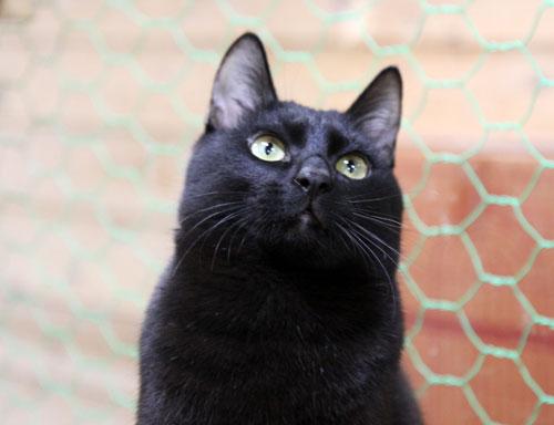 行政収容猫訪問_d0355333_11012552.jpg