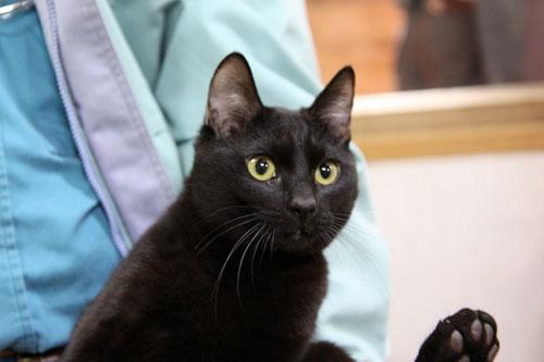 行政収容猫訪問_d0355333_11012645.jpg