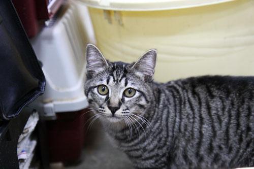 行政収容猫訪問_d0355333_11012678.jpg