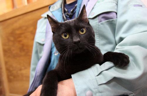 行政収容猫訪問_d0355333_11012712.jpg