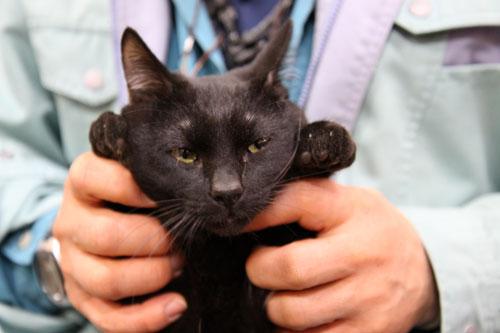 行政収容猫訪問_d0355333_11013027.jpg