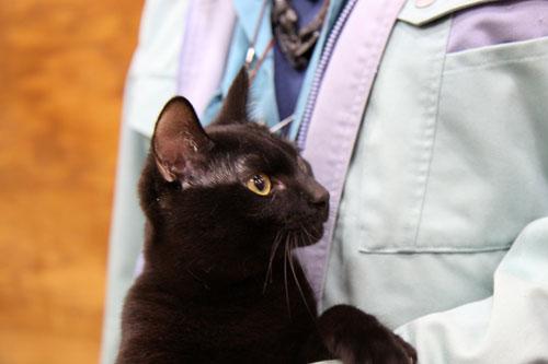 行政収容猫訪問_d0355333_11013176.jpg